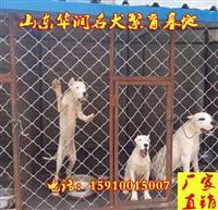 安康杜高犬幼犬价格