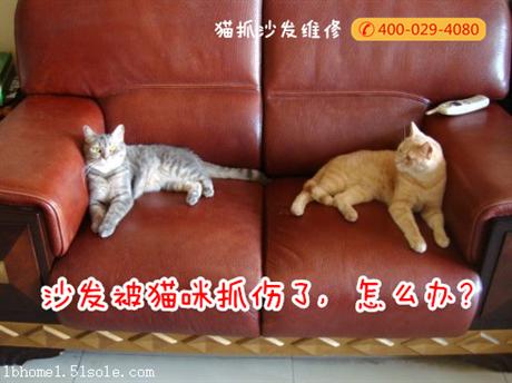 西安貓抓沙發維修 貓不抓沙發的秘密